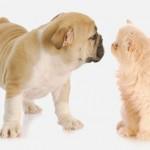 כלב וחתול